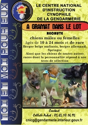 Sports canins, Concours canins, Ring